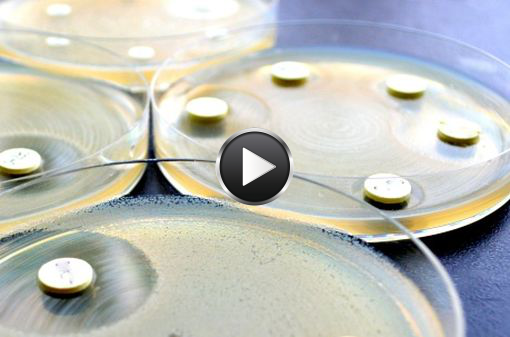 Détermination de la sensibilité d'une bactérie à plusieurs antibiotiques (antibiogramme, illustration).