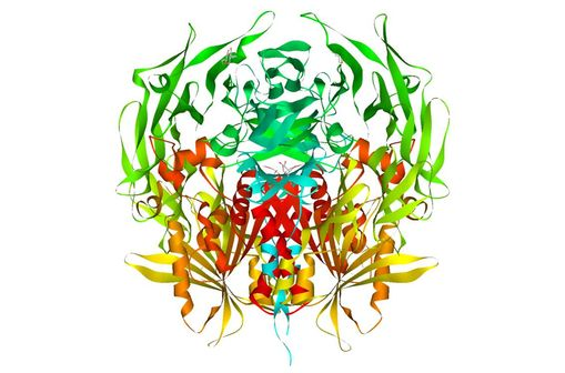 Représentation en 3D de la dipeptidyl peptidase-4 [DPP4] (illustration @Protein Data Bank, sur Wikimedia).