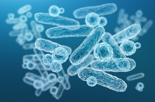 Le pivmécillinam est un bioprécurseur du mécillinam qui agit surtout sur les organismes à Gram négatif de la famille des entérobactéries (illustration).