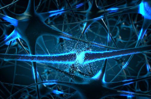 La maladie de Parkinson est une maladie neurodégénérative caractérisée par la destruction d'une population spécifique de neurones, les neurones à dopamine de la substance noire du cerveau (illustration).