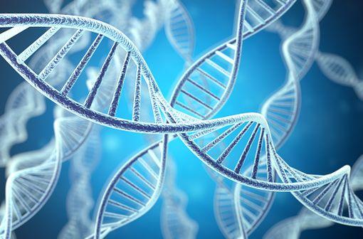 L'hypophosphatasie est une maladie génétique métabolique héréditaire rare qui résulte d'une ou plusieurs mutations avec perte de fonction du gène ALPL codant la phosphatase alcaline non tissu spécifique (illustration).