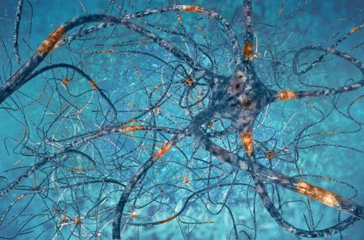 Le Dantrium est notamment indiqué en cas de sclérose en plaques, maladie auto-immune affectant le fonctionnement du système nerveux central.