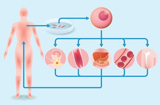 La recherche en médecine régénérative peine à passer dans la pratique médicale