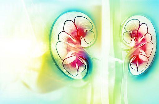 UN-ALFA est indiqué dans le traitement de l'hyperparathyroïdisme secondaire non freinable (tertiaire) chez l'insuffisant rénal chronique en hémodialyse (illustration).