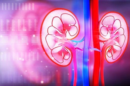 UN-ALFA injectable est indiqué dans le traitement de l'hyperparathyroïdisme secondaire non freinable (tertiaire) chez l'insuffisant rénal chronique en hémodialyse (illustration).