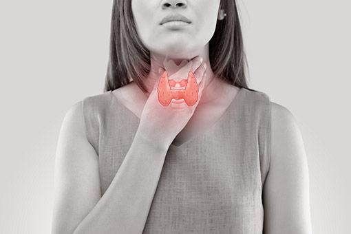 Les spécialités contenant du carbamizole ou de thiamazole sont utilisées dans le traitement des hyperthyroïdies (illustration)