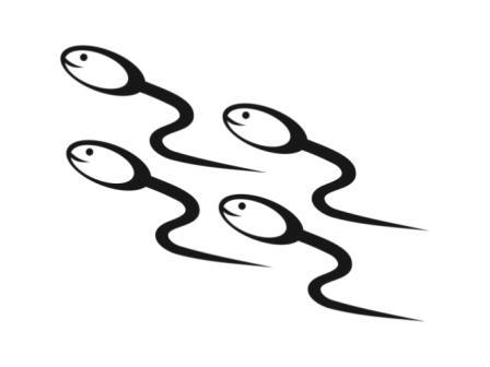 L\'éjaculation précoce concerne 15 à 30% des hommes à un moment de leur vie sexuelle.